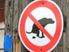 How Dog Poo Caught a Criminal